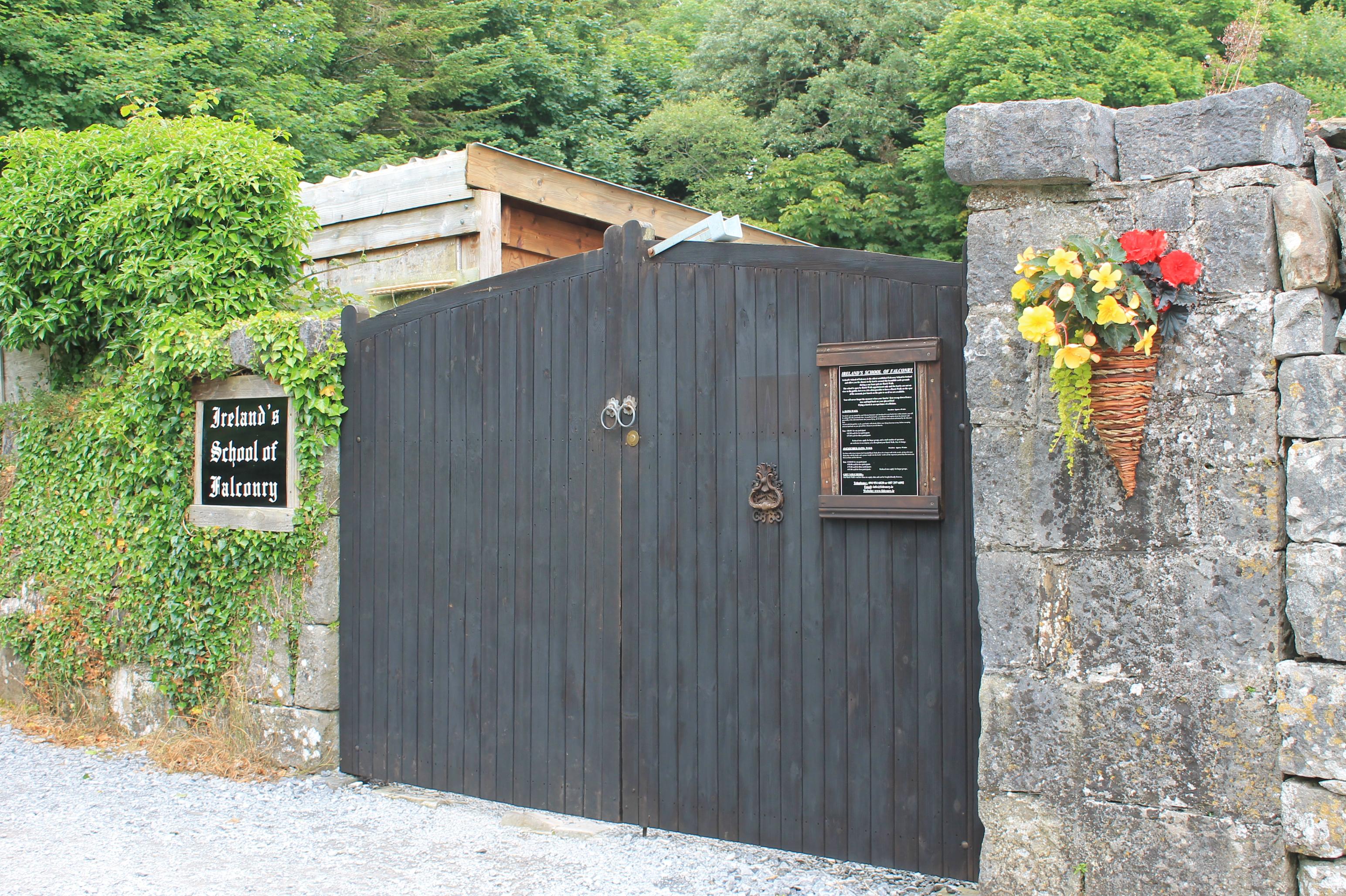 Ashford Castle Hawk Walk, Ireland's School of Falconry, Things to do in Cong Ireland