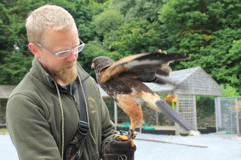 Hawk Walk, Falconry, Things to do in Cong Ireland