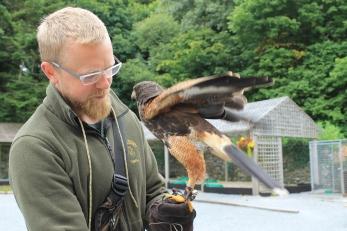 Hawk Walk, Falconry, Things to do in Cong Ireland